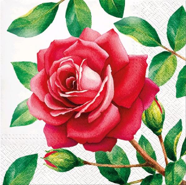Salvrätikud 20 tk roos
